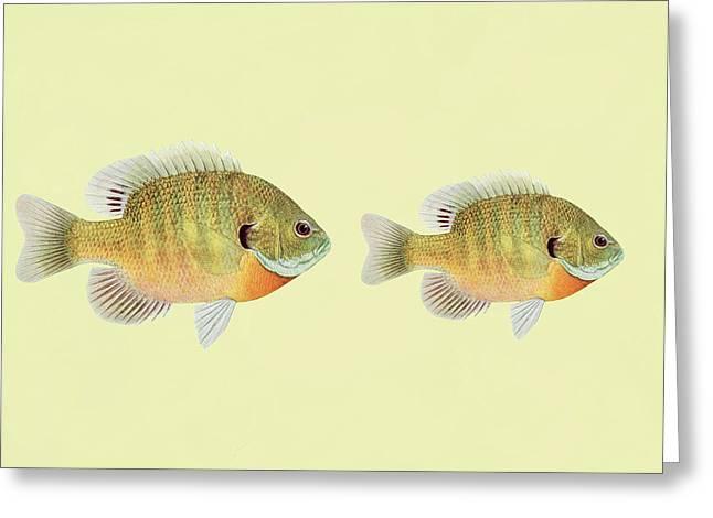 Big Fish Little Fish  Greeting Card by Georgiana Romanovna