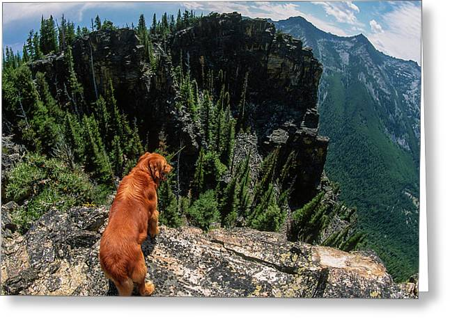 Big Golden Retriever Looking Over The Edge Of A Mountainous Wild Greeting Card