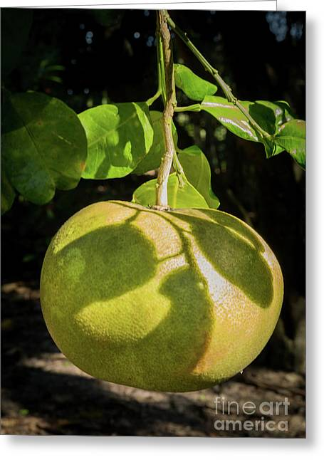 Big Grapefruit Greeting Card by Zina Stromberg
