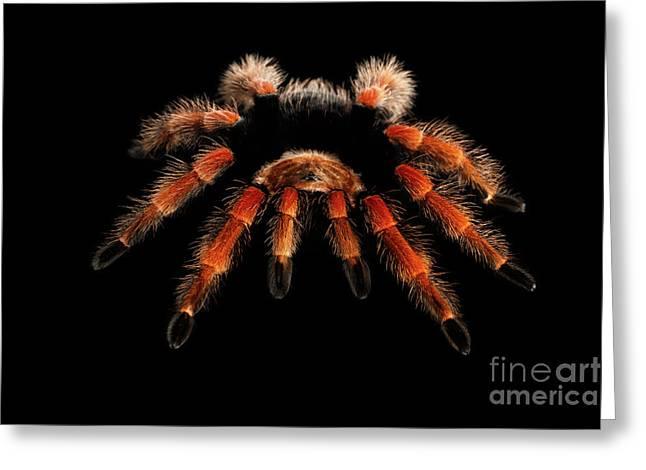 Big Hairy Tarantula Theraphosidae Isolated On Black Background Greeting Card