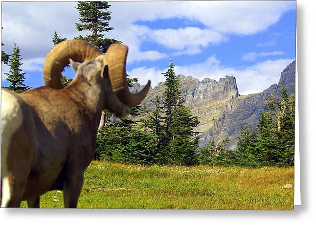 Big Horn 3 Greeting Card by Marty Koch