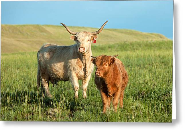 Big Horn, Little Horn Greeting Card by Todd Klassy