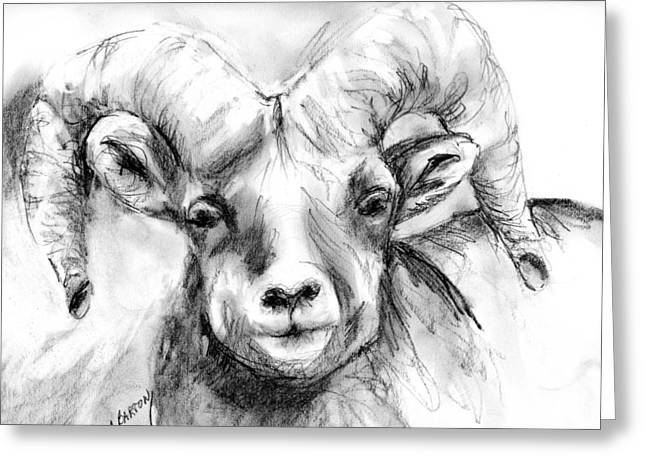 Big Horn Sheep Greeting Card by Marilyn Barton