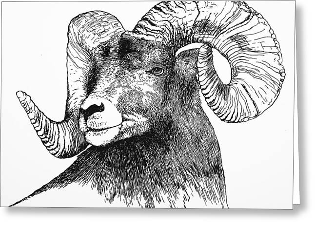 Big Horned Sheep Greeting Card
