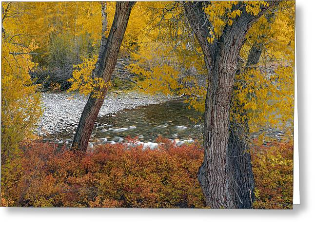 Big Lost Autumn Greeting Card by Leland D Howard