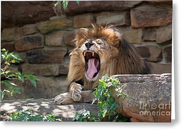 Big Mouth Greeting Card by Jeannie Burleson