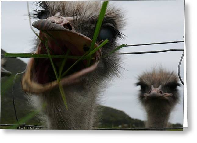Big Mouth Ostrich Greeting Card