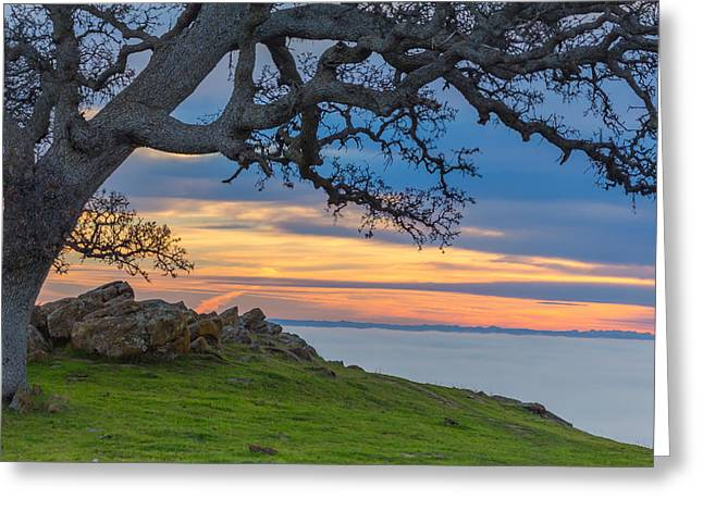 Big Oak Above Fog Greeting Card