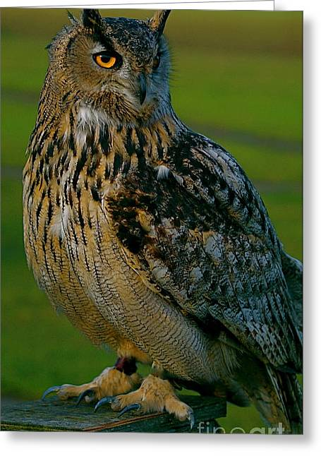 Greeting Card featuring the photograph Big Owl by Louise Fahy