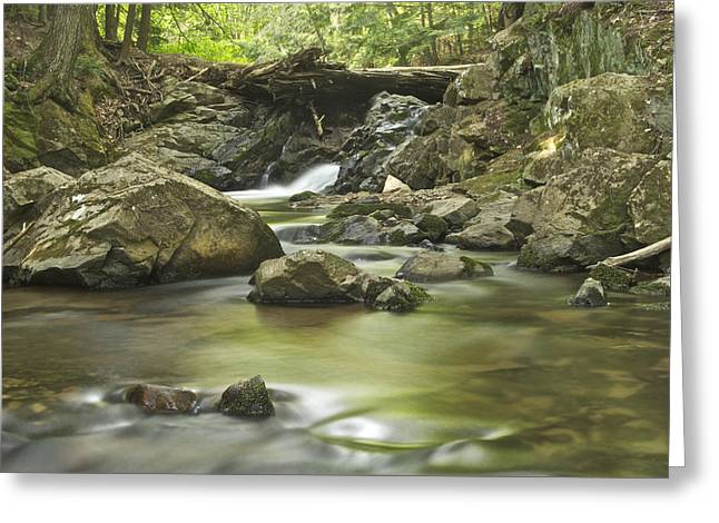 Big Pup Falls 5 Greeting Card by Michael Peychich