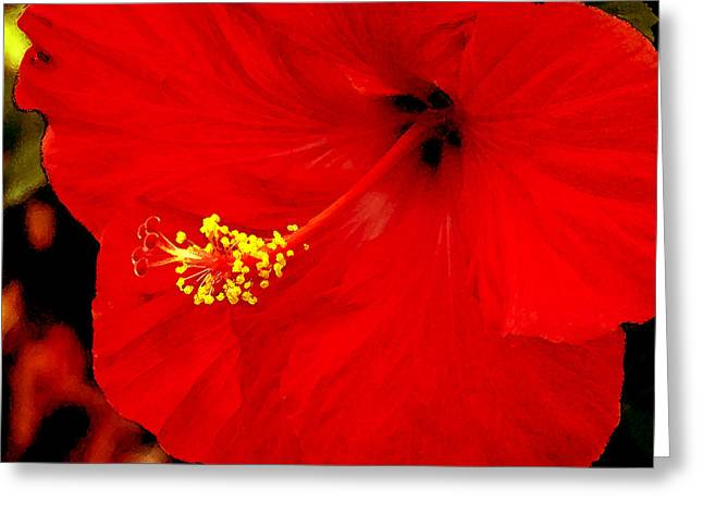 Big Red Caribbean Hibiscus Greeting Card by Leonard Rosenfield