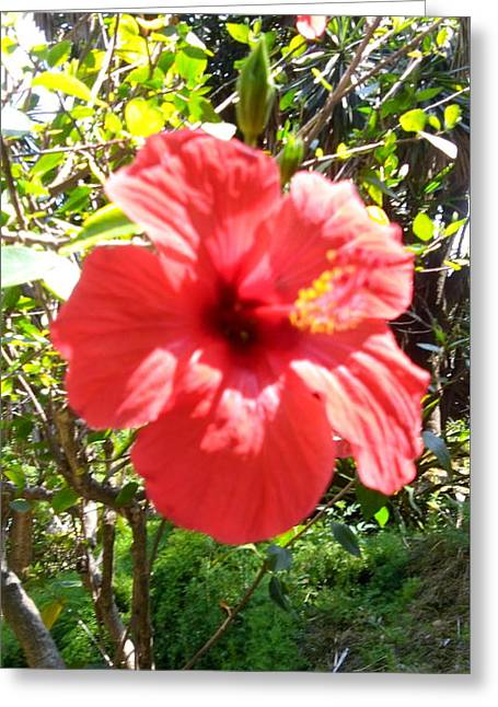 Big Red Flower Greeting Card