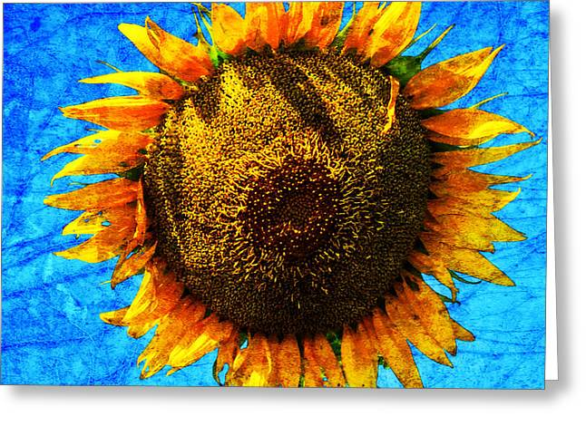 Big Sunflower Greeting Card