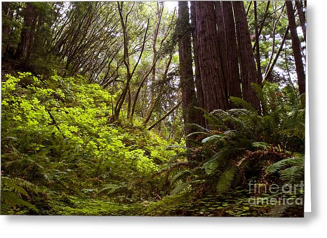Greeting Card featuring the photograph Big Sur Red Woods by Gary Brandes