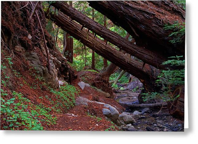 Big Sur Greeting Cards - Big Sur Redwood Canyon Greeting Card by Charlene Mitchell
