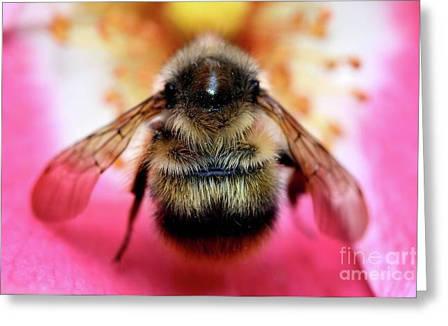 Big Time Bee Close Up Greeting Card by Terry Elniski