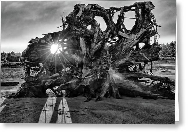 Big Tree On The Beach At Sunrise In Monochrome Greeting Card