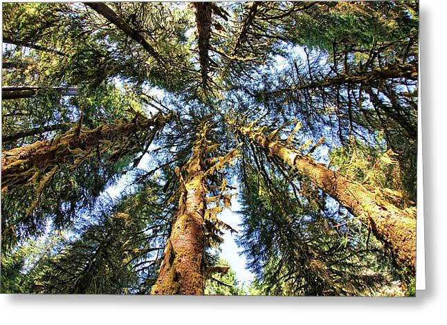 Big Trees In Olympic National Park Greeting Card