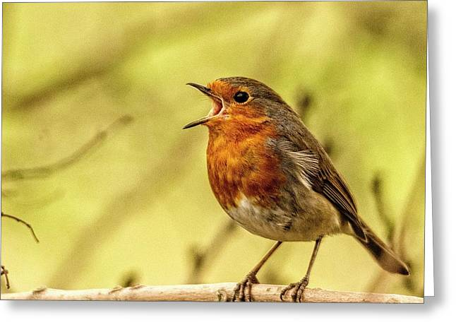 Greeting Card featuring the photograph Big Voice Robin  by Cliff Norton