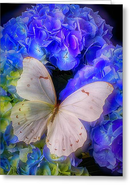 Big White Butterfly Greeting Card by Garry Gay