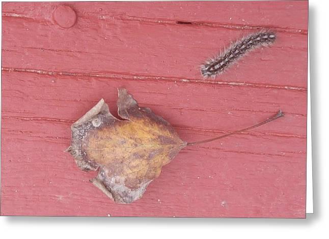 Bigger Than Me Caterpillar Leaf Greeting Card