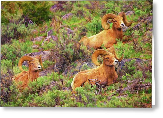 Bighorn Impressions Greeting Card by Greg Norrell