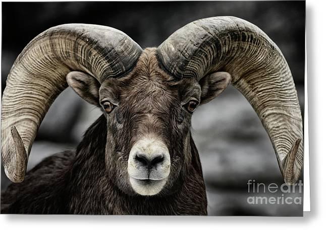 Bighorn Ram Greeting Card by Brad Allen Fine Art