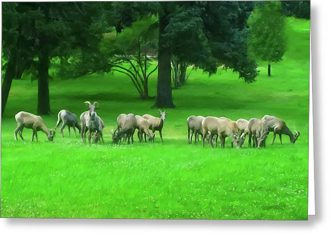 Greeting Card featuring the digital art Bighorn Sheep Ewes  by Chris Flees