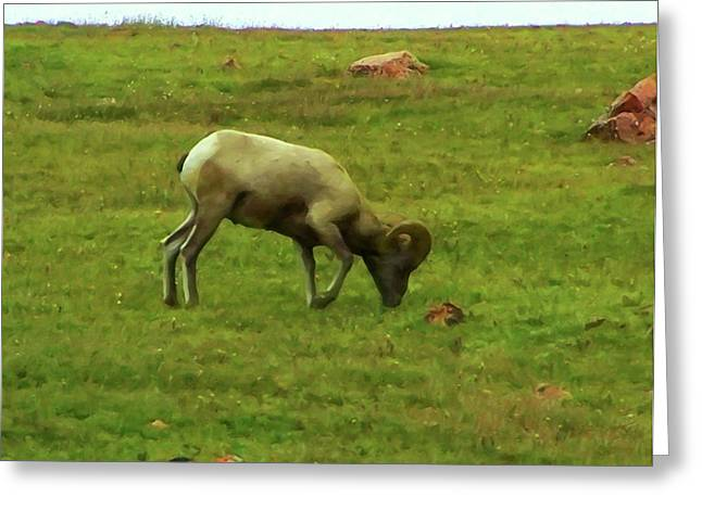 Greeting Card featuring the digital art Bighorn Sheep Grazing by Chris Flees