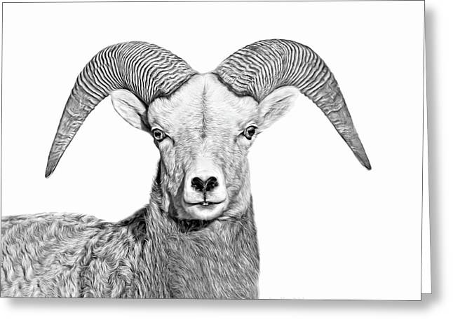 Greeting Card featuring the photograph Bighorn Sheep Ram Black And White by Jennie Marie Schell