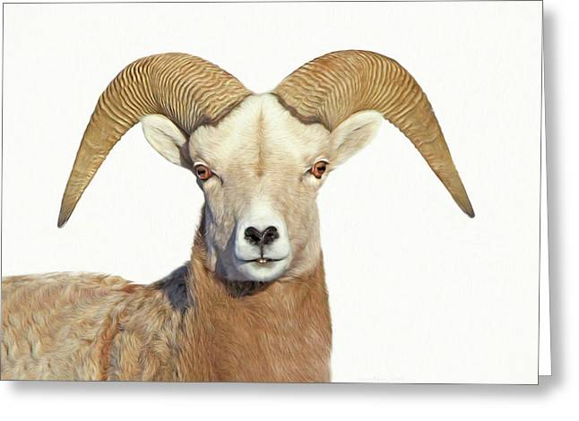 Greeting Card featuring the photograph Bighorn Sheep Ram by Jennie Marie Schell
