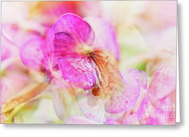 Bigleaf Hydrangea Abstract Greeting Card by Nick Biemans