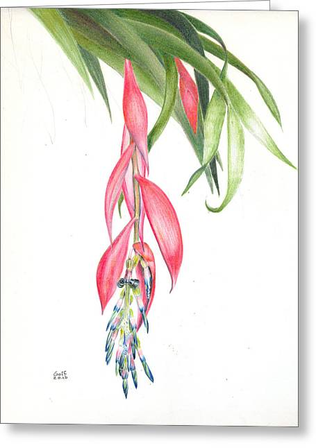 Billbergia 'windii' Greeting Card
