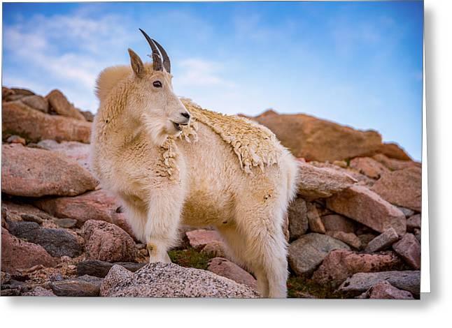 Billy Goat's Scruff Greeting Card by Darren White
