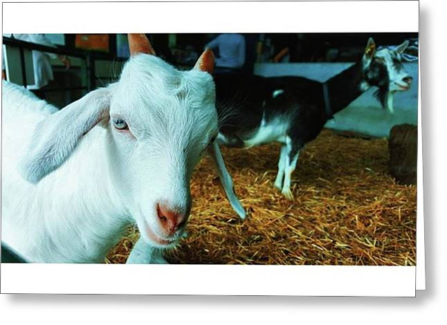 #billygoat #farm #sussex #animals Greeting Card by Natalie Anne