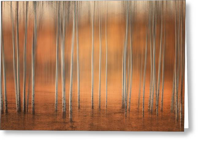 Birch Abstract Greeting Card by Naman Imagery