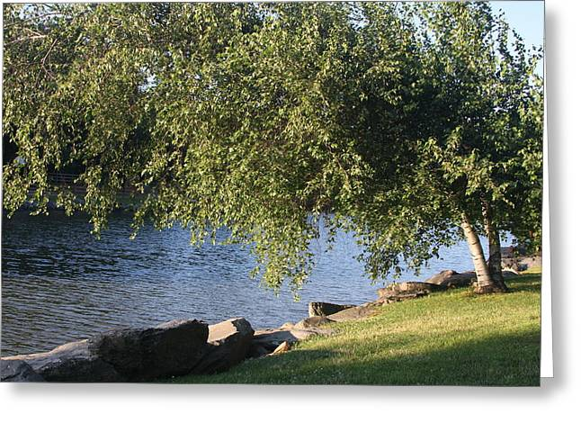 Greeting Card featuring the photograph Birch And Lake by Vadim Levin