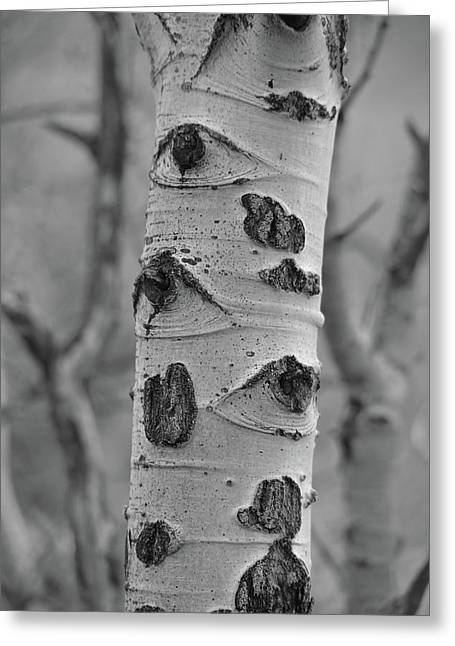 Birch - Black And White Greeting Card