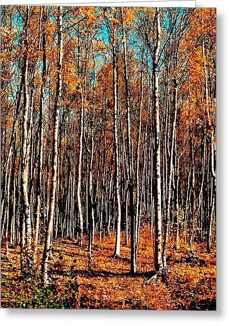 Birch Greeting Card by Brigid Nelson