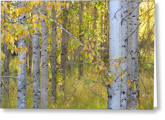 Birch Forest Greeting Card by Bonnie Bruno