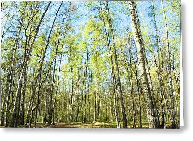 Birch Forest Spring Greeting Card