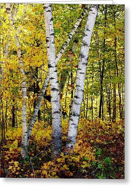 Birch In Gold Greeting Card