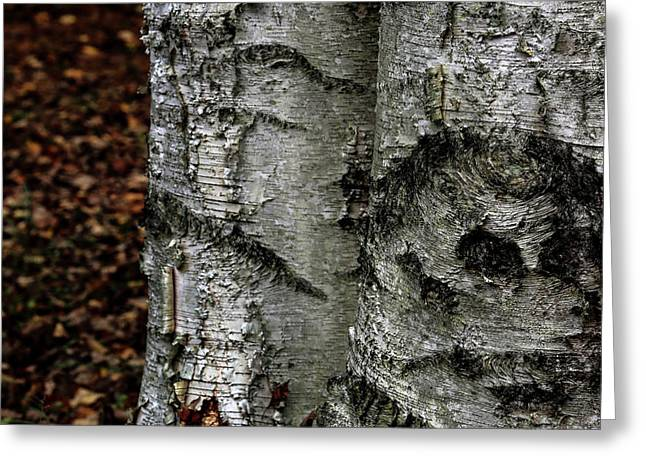 Greeting Card featuring the photograph Birch by Kenneth Campbell