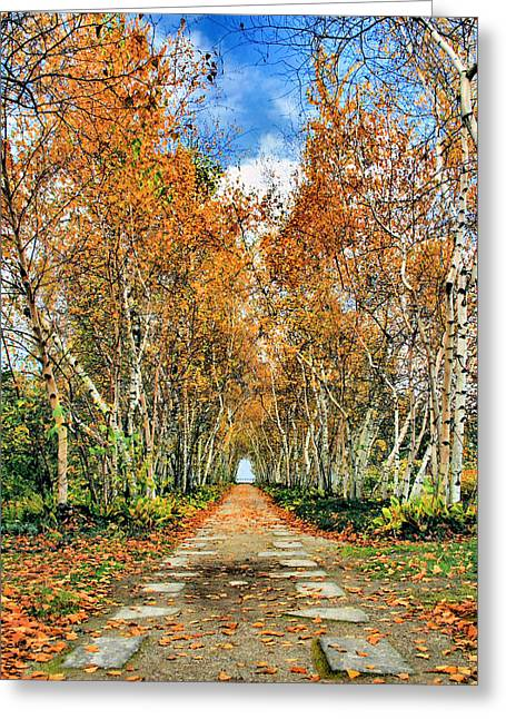 Birch Pathway Greeting Card by Kristin Elmquist