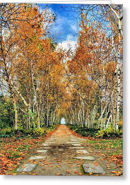 Birch Pathway Greeting Card by Kristin Elmquist