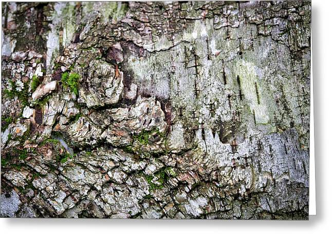 Birch Tree Abstract #5 Greeting Card by Stuart Litoff