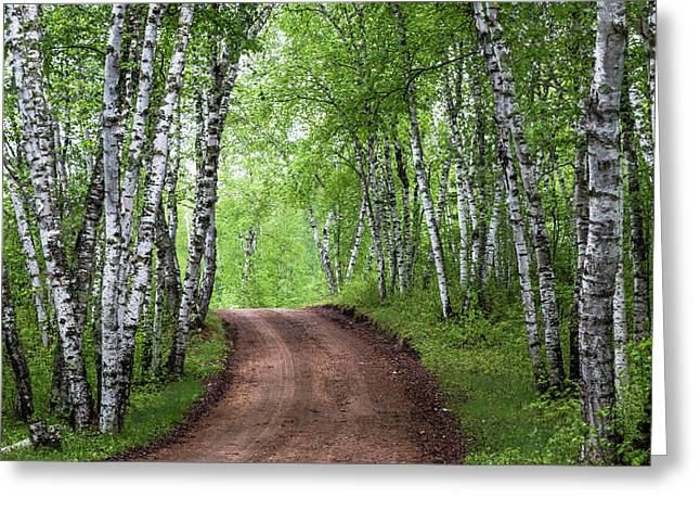 Birch Tree Forest Path #3 Greeting Card