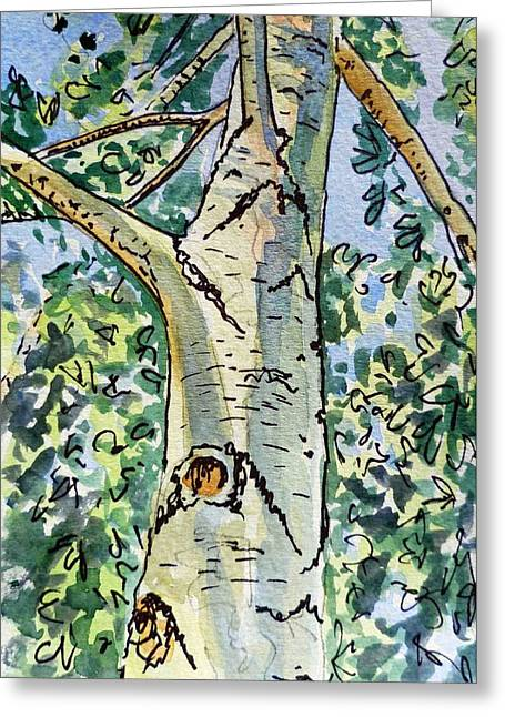 Birch Tree Greeting Cards - Birch Tree Sketchbook Project Down My Street Greeting Card by Irina Sztukowski