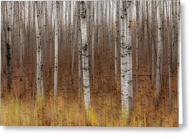 Birch Trees Abstract #2 Greeting Card