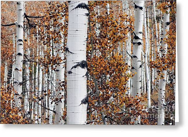 Birch Trees Abstract Greeting Card by Bedros Awak